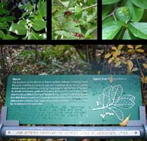 Information panel with braille raised letters and engraving part of the sign system and exhibit design program in Teardrop Park | CRA sign system design and consulting services